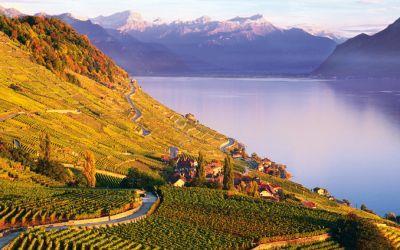 Esportare vino in svizzera mglobale
